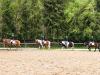 Reiterwettbewerb – Ponyparade